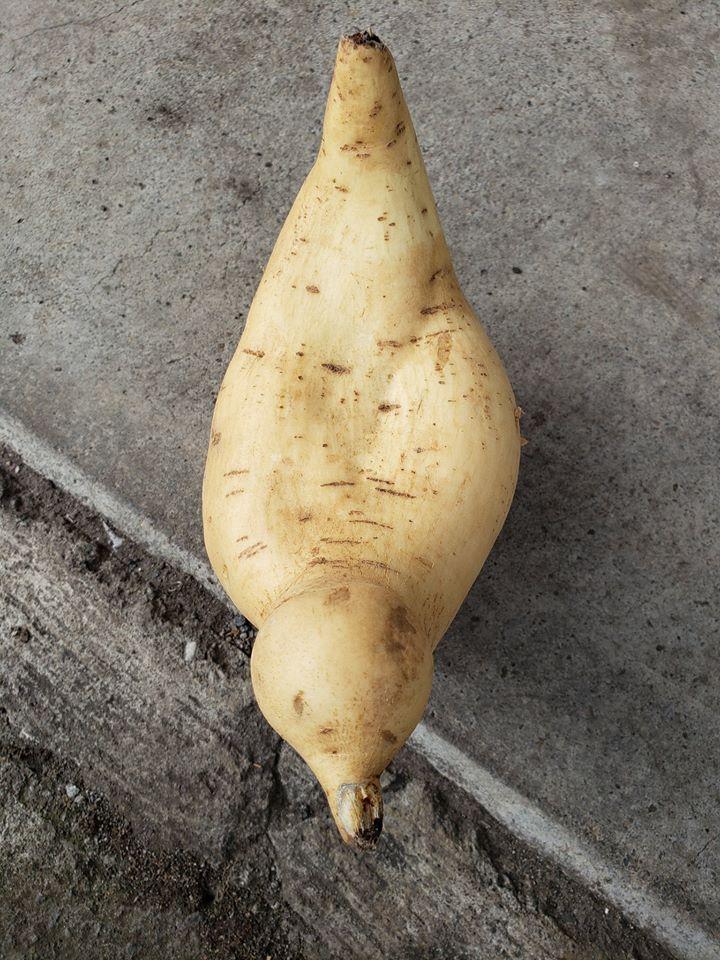網友捕獲野生「鳥形狀的馬鈴薯」還原程度超驚人 就連鳥喙都一模一樣!