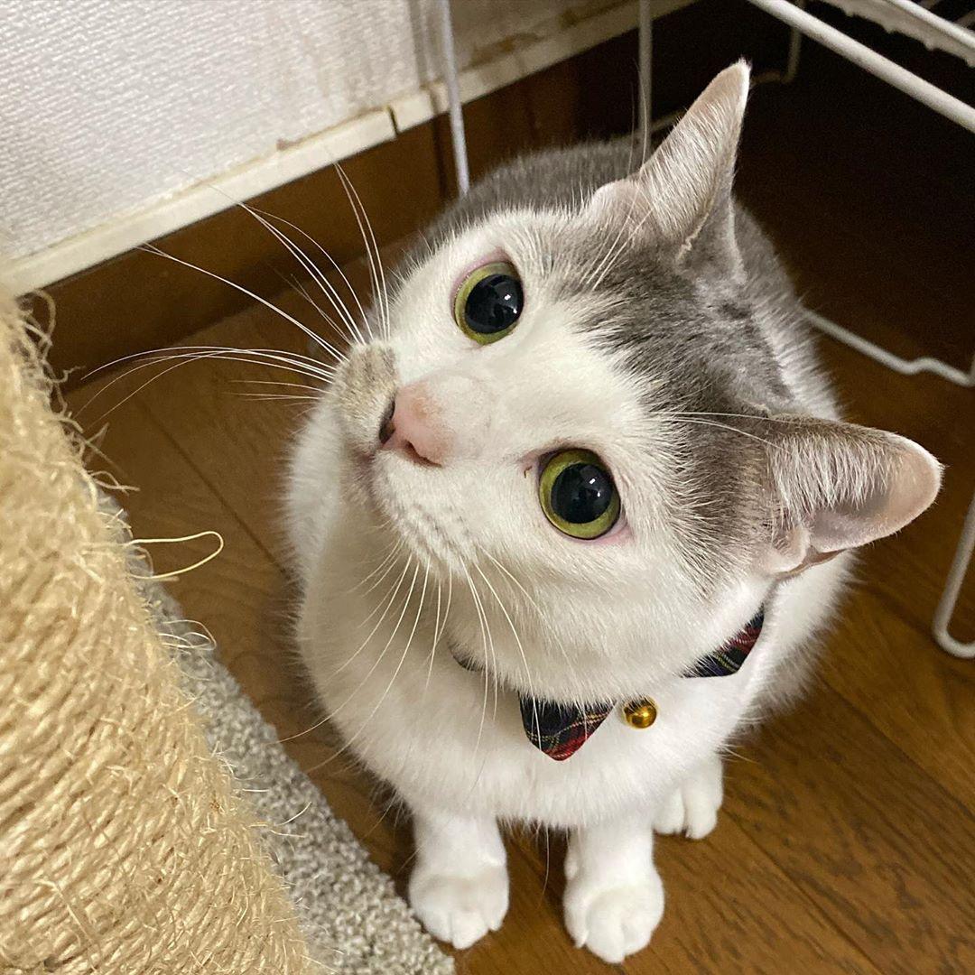 時尚小貓咪天生擁有「氧氣瀏海」 空靈「大眼+髮型」直接融化大票貓奴!