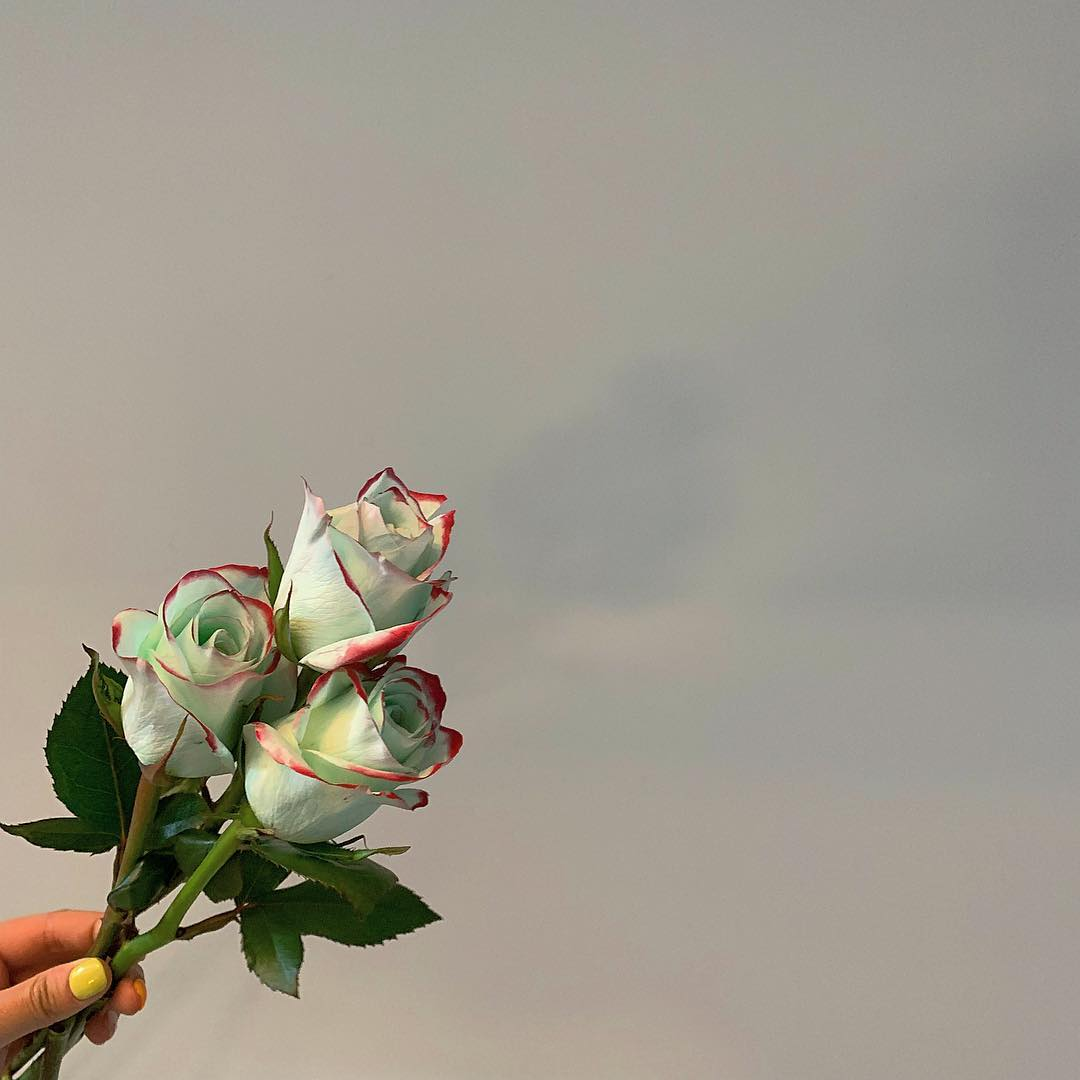 韓網瘋「暈粉迷霧綠玫瑰」顏色太夢幻 情人節「放閃開大絕」男友快記下來!