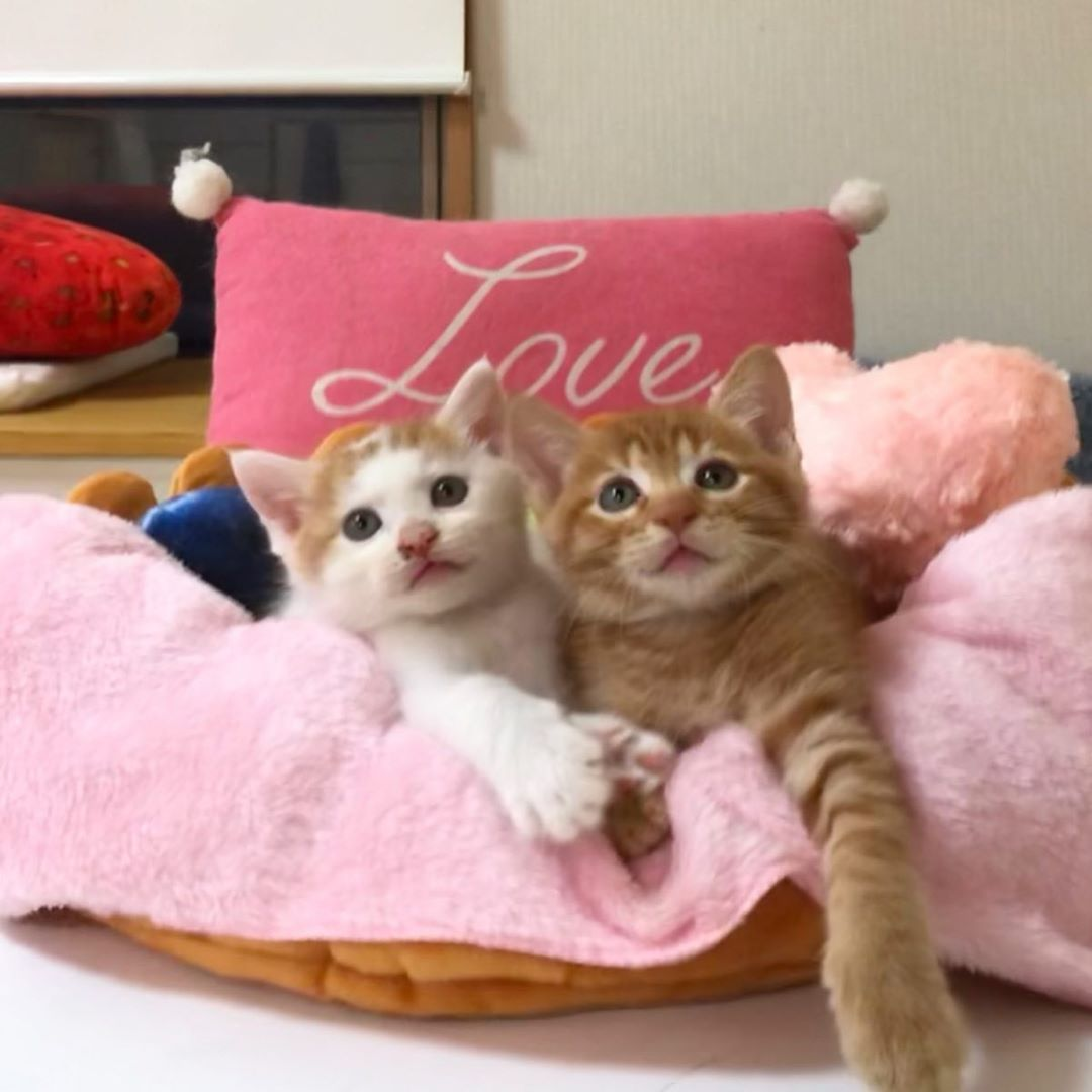 呆萌貓因「手牽手甜睡照」爆紅 牠們「親對方臉頰放閃」貓奴全融化❤