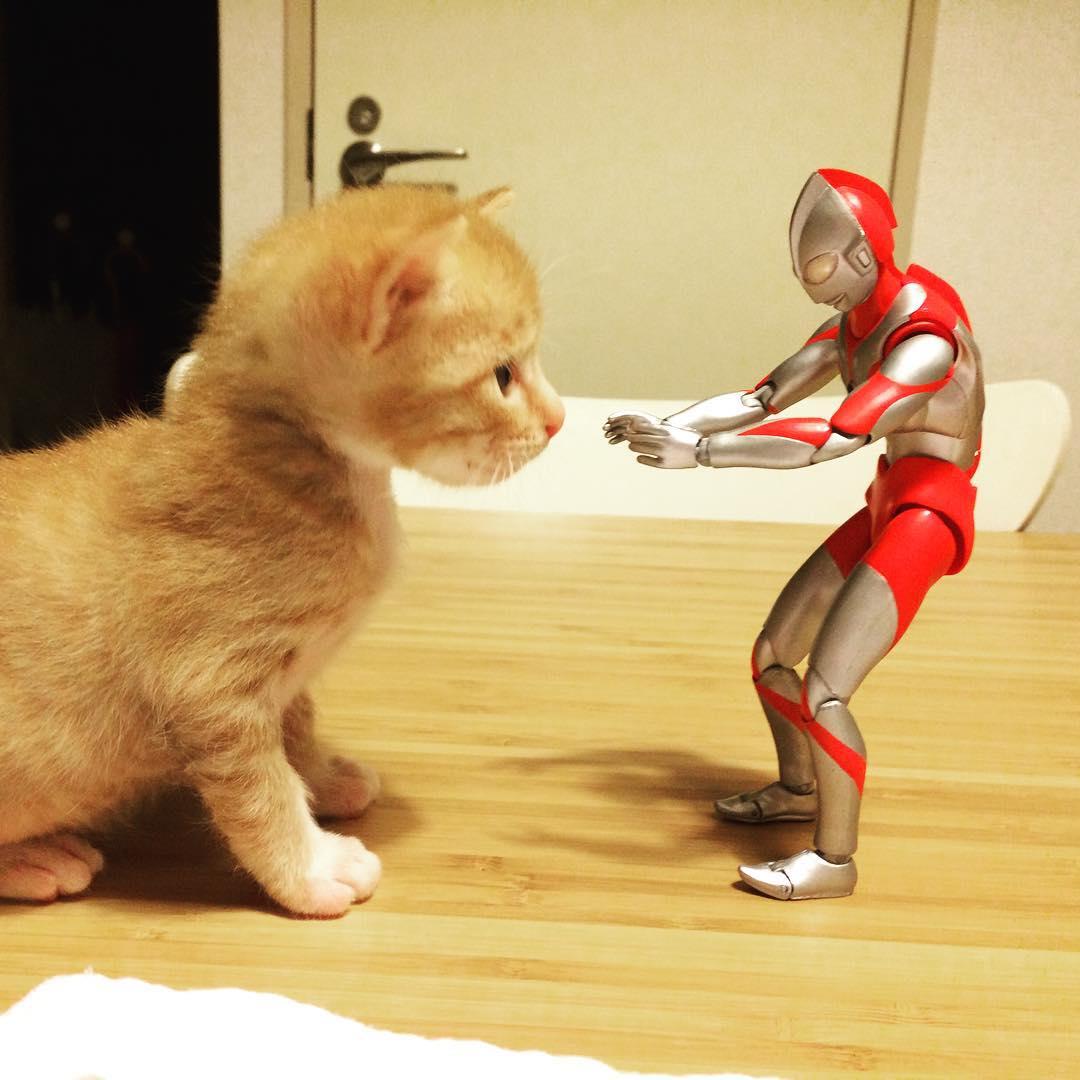 「橘貓與鹹蛋超人」的跨種族超暖友情 從小「睡在一起」最有安全感❤