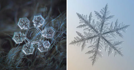 攝影師拍出「微距鏡頭下的雪花」 花「8個冬天」終於拍到《冰雪奇緣》場景❤