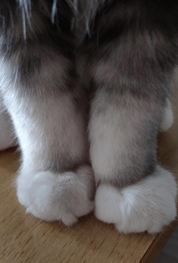 15個證明貓咪是「世上最可愛生物」的證據 有「雙下巴」就是超級好貓!