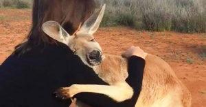 5個月大就失去媽媽!小袋鼠找到新家後「持續10年」瘋狂抱抱:謝謝你們❤