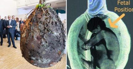 最新樹葬法!直接「把人變種子」包起來種下去「超前衛方式」你敢嘗試嗎?