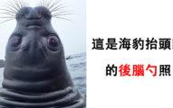 海豹的「後腦勺」其實長超怪!網友惡搞「多加1雙眼睛」竟然變超可愛