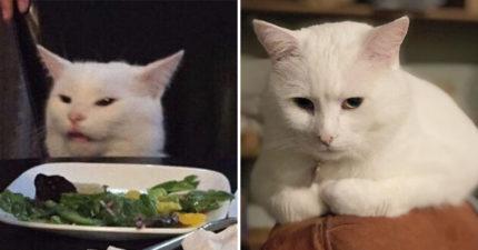 厭世貓「一臉嫌棄梗圖」狂吸百萬粉絲 主人揭開「挑食原因」竟跟香菜有關!