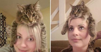 搞怪貓「跳到主子頭上」Cosplay帽子 超萌習慣「每天20分鐘」成固定任務!