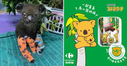 吃小熊餅乾「救無尾熊」是真的!小編證實:外盒「有專屬標記」才對