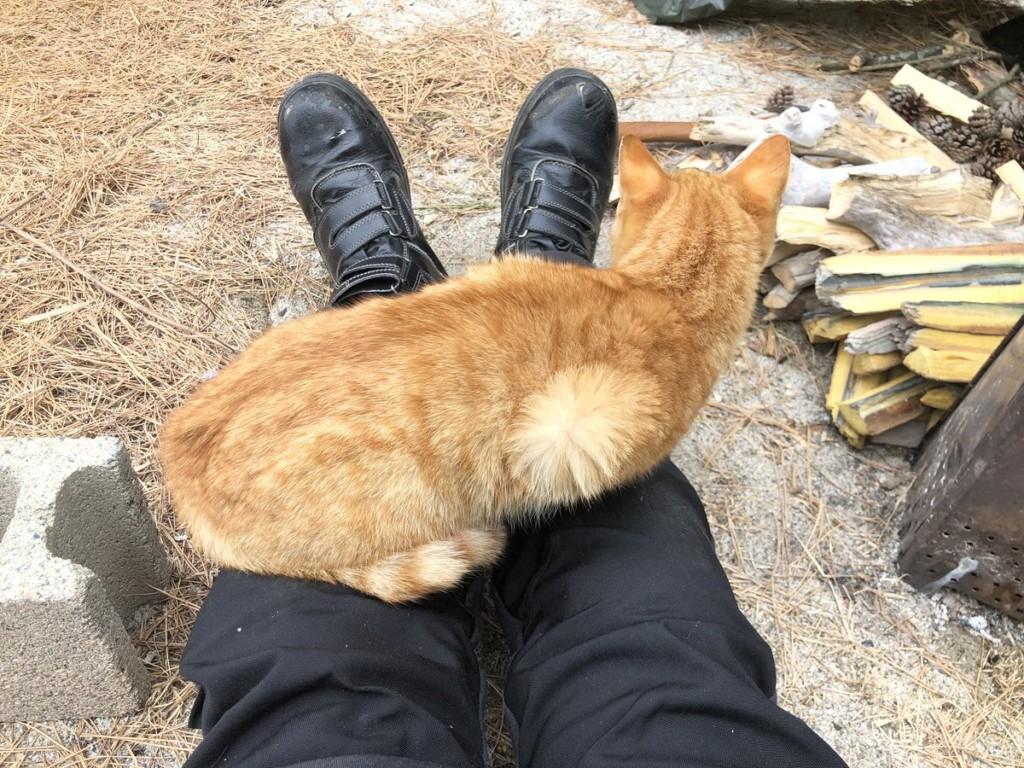 露營巧遇「厚臉皮貓皇」湊熱鬧 牠們隔天早上送「超可愛謝禮」:營火很暖!