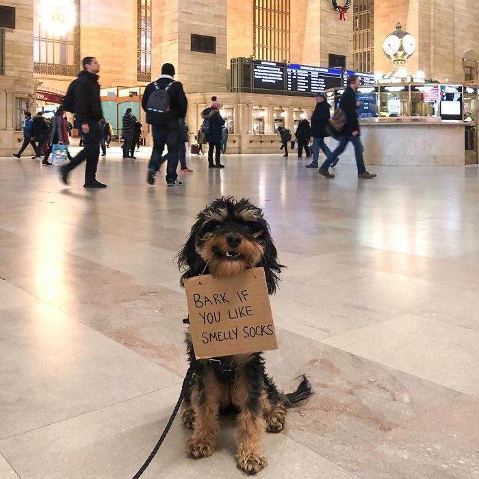 10張狗狗舉牌抗議的「厭世日常」 對「真單身狗」呼籲:不要利用我把妹!