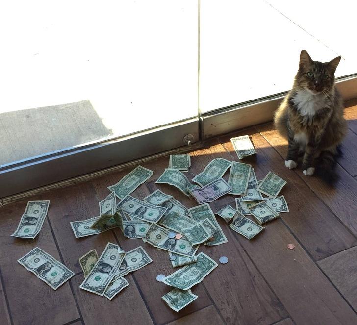 辦公室「養貓抓老鼠」意外變招財貓 每天出現「數不完的鈔票」員工傻眼