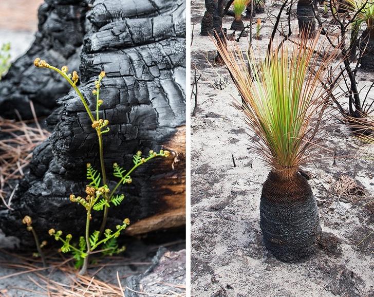 19張「澳洲正在恢復生氣」的正能量希望照 森林歷經大火仍充滿「生命力」!