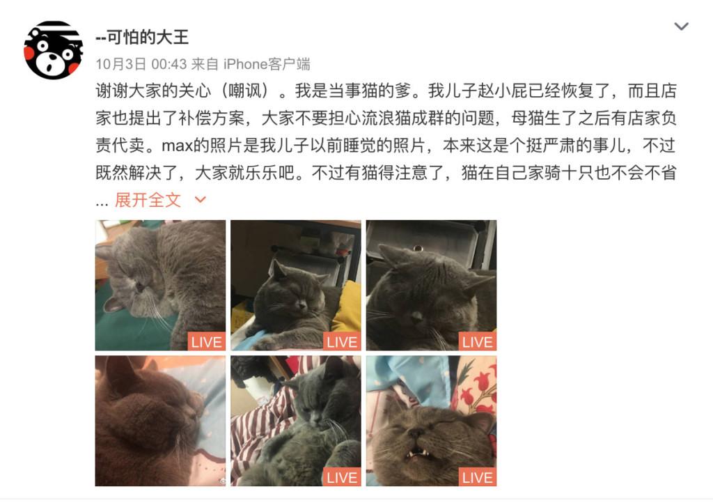 「貓皇沒結紮」寵物店卻直接忘記 一個晚上「5隻母貓遭殃」牠累到打點滴!