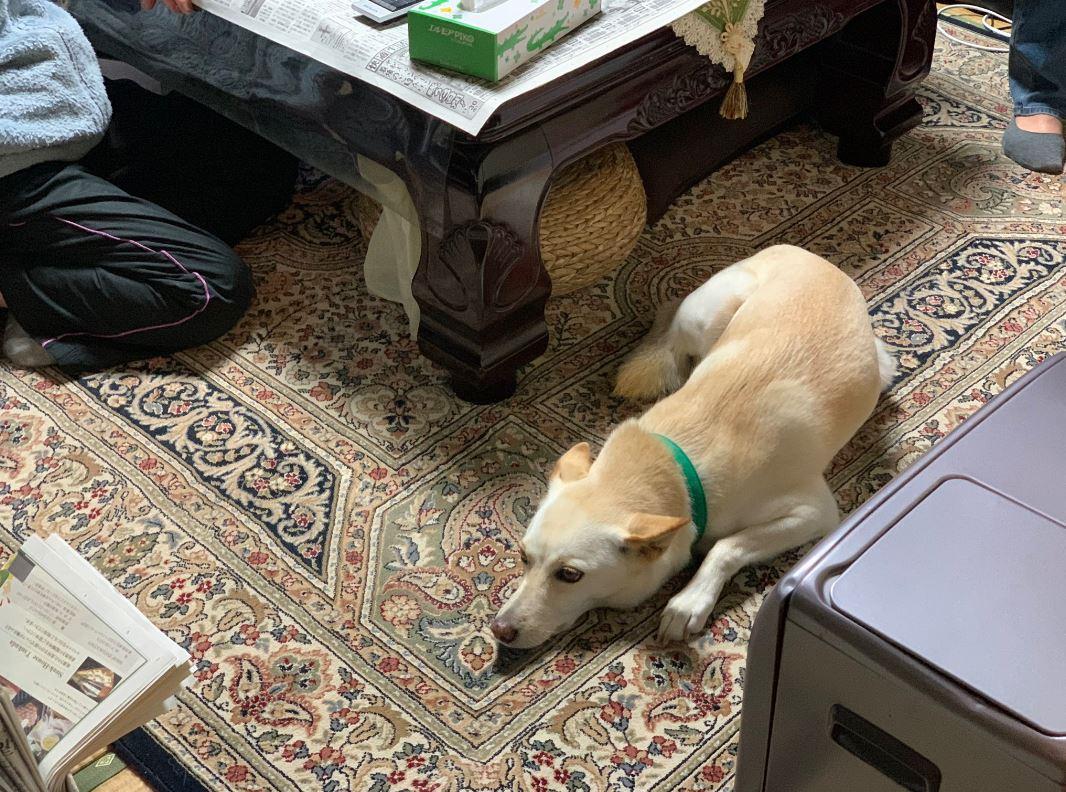 開門驚見「狗狗淡定坐客廳」迎接 他無奈揭「荒謬真相」嘆:是隔壁家的!