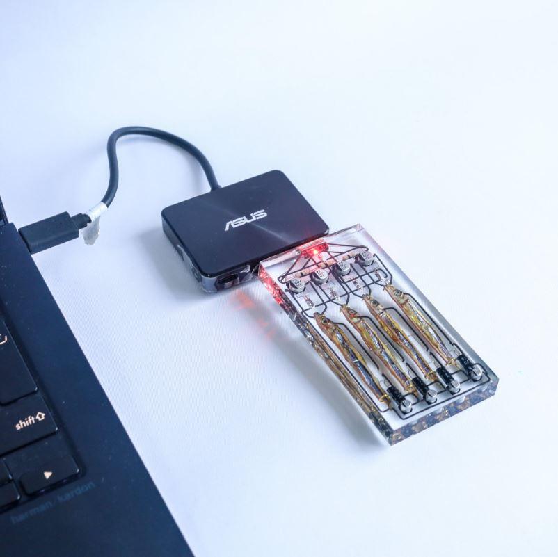 腦洞學生打造「用小魚乾做的」USB 「巨大容量」網讚:金魚腦必買!