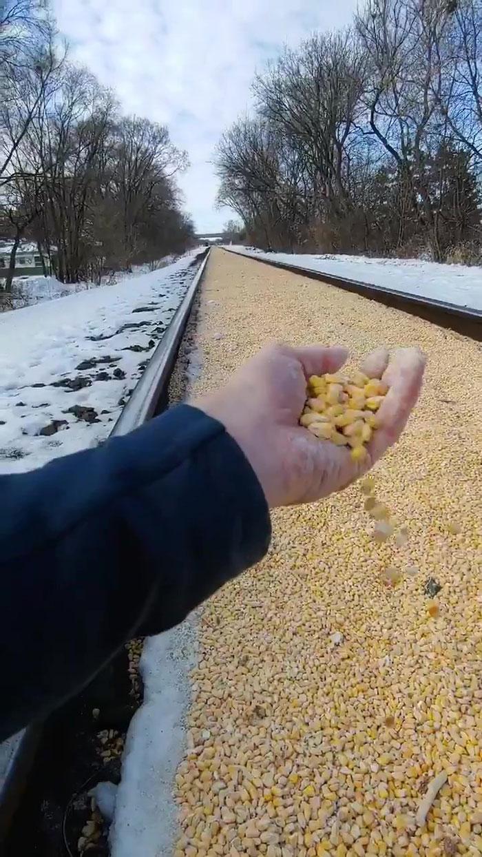 一覺醒來家門旁鐵道「被玉米填滿」 超療癒景象網看傻:比台灣馬路還平!