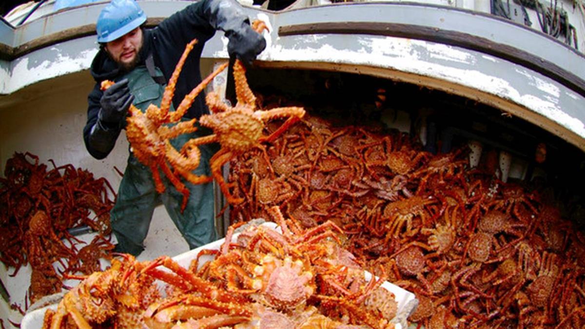 一年工作5天「年薪300萬」卻都缺人 捕蟹人「生命危險」比上班族高30倍!