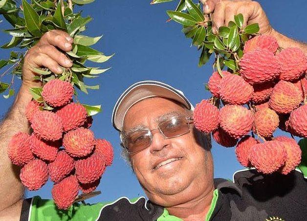研發20年「無籽荔枝」終於成功 吃起來「像鳳梨」他拚量產:澳洲先開始!