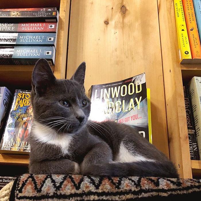 一開門都是小萌貓!中途之家書店「收養率100%」看書還有喵星人躺大腿❤
