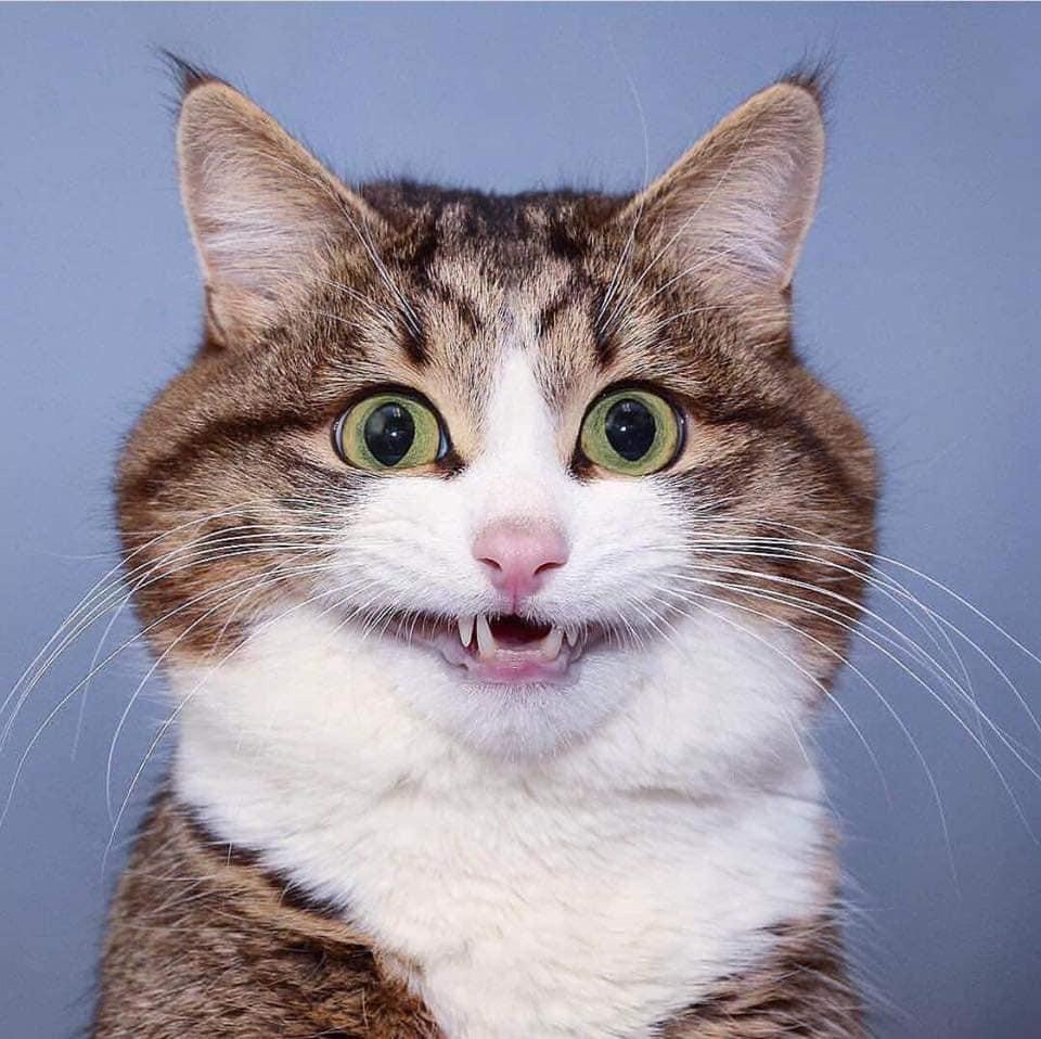 最ㄎㄧㄤ「表情富翁」崩壞貓咪變梗圖 「迷幻眼神」網笑翻:到底嗑了什麼!