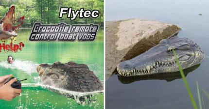 影/超擬真「遙控鱷魚頭」成最新整人流行 實測放水面結果...反應超爆笑!