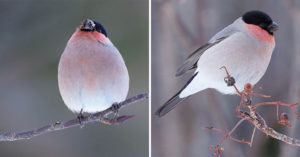 網用鏡頭捕捉到「莫蘭迪小鳥」 粉藍漸層毛搭上「桃紅脖圍」榮登仙女鳥寶座❤