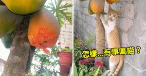 網種木瓜驚見「只剩半顆」傻眼 目擊「偷吃現場」笑翻:這個不能惹!