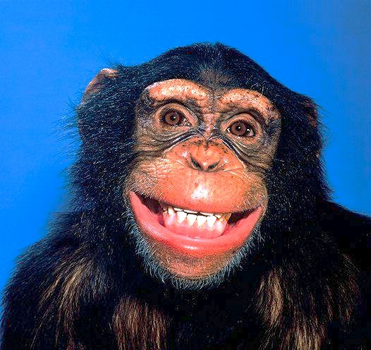 自然界中「最會擺Pose拍照」的野生動物們 烏龜竟然微笑了!