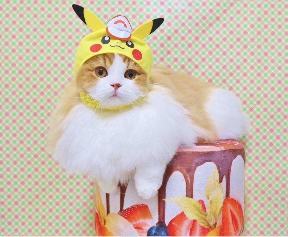日本推超Q「寶可夢貓咪頭套」 奴才必收 臭臉金吉拉秒變萌萌卡比獸❤
