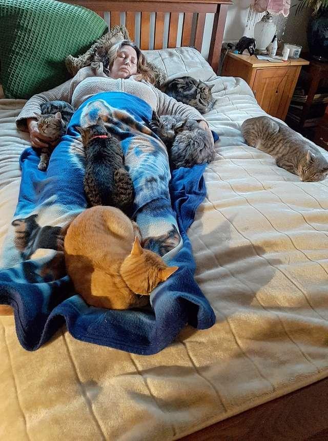 手術後「5隻貓咪」驚喜圍在身邊 背後原因曝光後…網暖哭:最棒的陪伴❤
