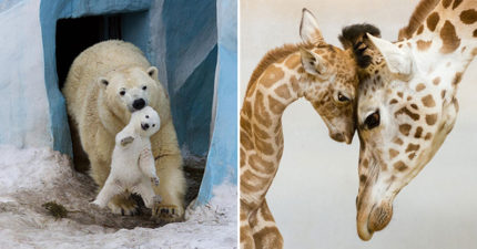 25張「註定拿攝影大獎」動物親子照 企鵝爸「一起帶小孩」畫面超壯觀!
