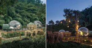 超夢幻「水晶泡泡屋」直接住在叢林裡 睡醒「大象就在旁邊」一起生活!