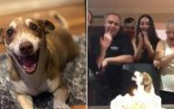 家人圍一圈幫「13歲狗狗」過生日 牠幸福到狂回頭:我在做夢嗎?
