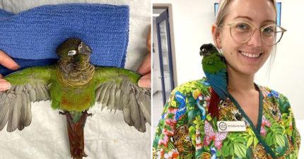 正妹獸醫「幫鸚鵡接翅膀」讓牠「再次飛上天空」靠肩緊貼致謝:謝謝妳❤