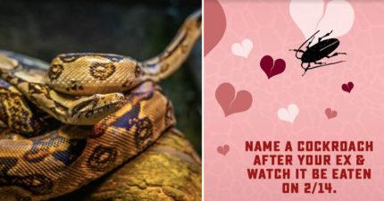 單身蛇蛇們不再害怕情人節!動物園祭「蟑螂取前任名餵蛇」療癒活動