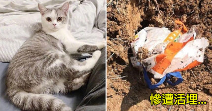 飼主「感染武漢肺炎」被隔離 愛貓卻被「活埋致死」當局冷回:應群眾要求