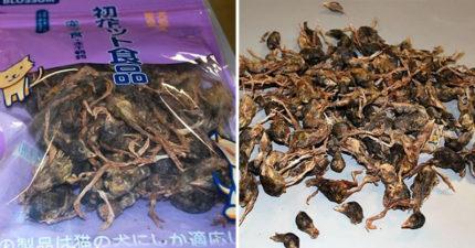 美海關截獲「塞滿小鳥乾屍」的可疑包裹 中國遊客堅持:是寵物零食!