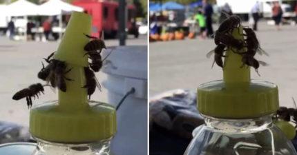 蜜蜂偷懶不找花「合力開蜂蜜蓋」當自助餐狂吃 老闆無奈:低消是飲料啦!