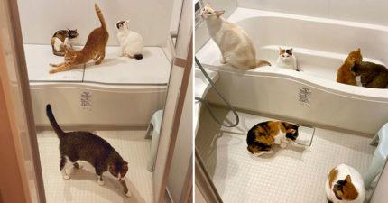 讓貓咪自動聚集的絕招 只要「一根手指」主子們馬上靠過來!