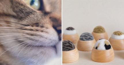 蒐集貓皇「掉落的幸運鬍鬚」!超可愛小物「鬍鬚山」一起來種貓咪吧