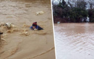 半座城市被淹沒!她「綁一條繩」跳2公尺深水 「手抱300隻羊」平安逃脫