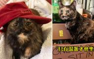 26張圖告訴你為何雙色貓是「上帝選中的貓咪」看到一半就:太可愛不行了