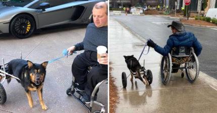 輪椅狗狗「被退貨3次」終於找到「命定主人」 四輪一起出門散步!