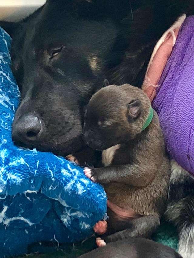 懷孕母狗骨折「超暖狗朋友」相伴好幾小時 堅持「陪上救護車」:我保護妳❤