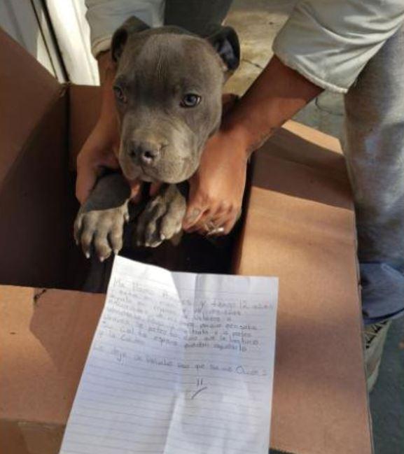 12歲男童為了「拯救好朋友」決定把愛犬「送到收容所」:爸爸每天打牠