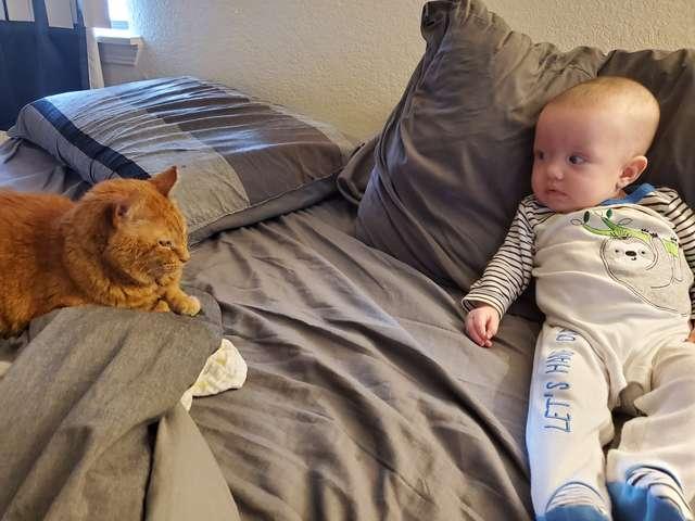 高冷貓對「新成員寶寶」態度冷漠 卻被抓包「超有愛證據」貓奴:口是心非!