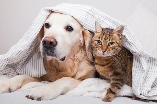 動保組織呼籲「停止說寵物」才是真愛 毛孩跟我們是平等的:這個詞早該淘汰!