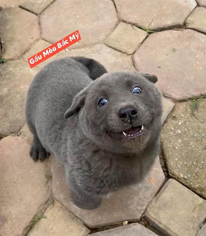 到底是貓還是狗?神奇生物靠「超綜藝表情」開粉專「5天狂吸4萬粉」!