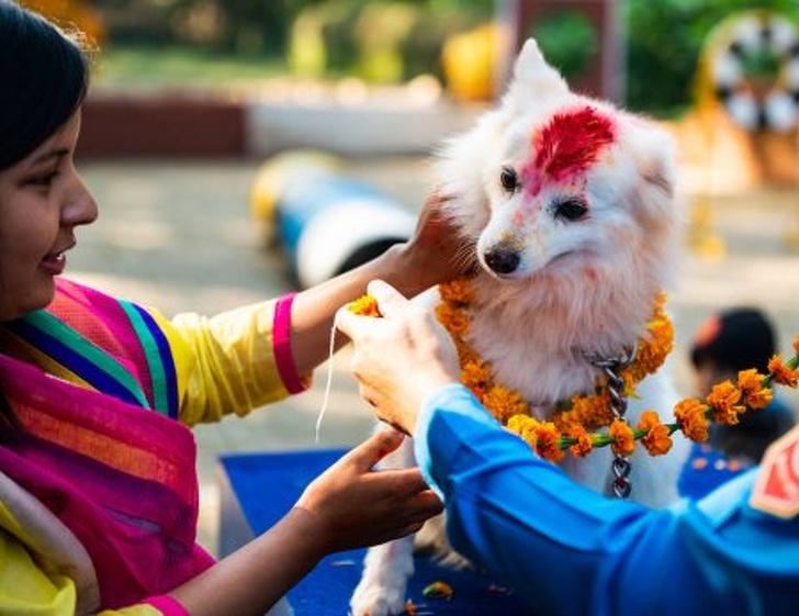 尼泊爾大事「感謝狗狗日」全球蔓延中 浪浪也「被邀請」網推爆:台灣也要